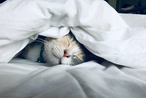 cat sleeping under a big comforter